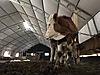 10X85 Büyükbaş Hayvan Çadırı 850M2 Nakliye Montaj Dahil