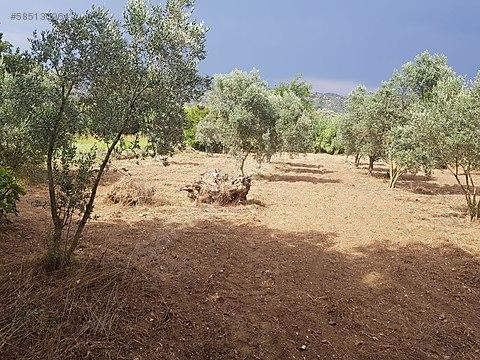 elektrik su yol derdi olmayan çiftlik arazisi 60...