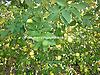 yenicede satılık limon bahçesi #220214143