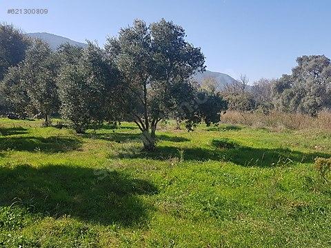 Organik tarım ve çiftlik arazisi 48 bin lira