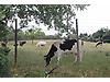Bigalı Köyünde Tam Teşekküllü Hayvancılık Besi/Üretim Çiftliği #216307402