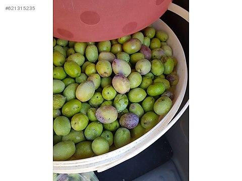 Danişment köyüne yakın 2400m2 zeytinlik