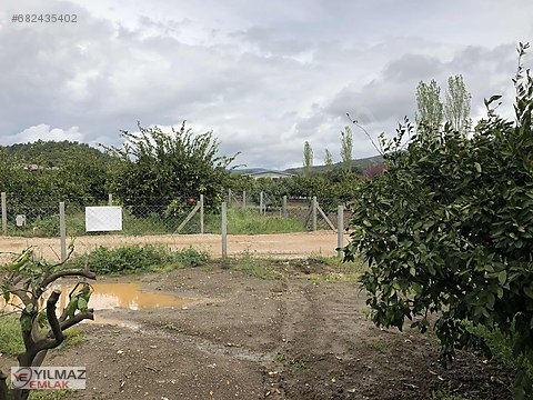 Ahmetbeyli SATILIK MandalinA Bahçesi