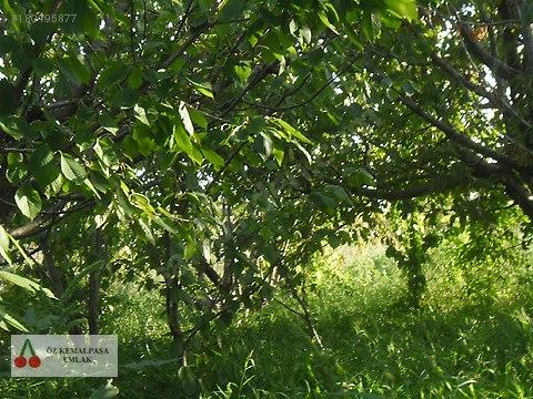 kemalpaşa akalan köyünde yatırımlık arazi 16 dönüm #180495877
