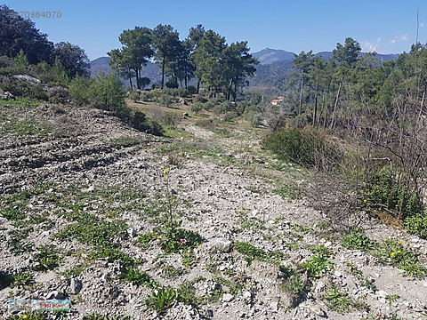 Dalaman Karacaağaç Köyünde Satılık Arazi