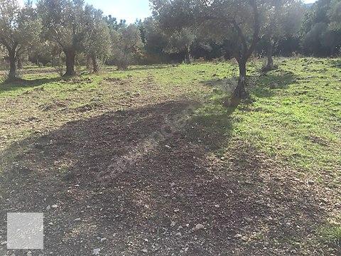 Urla Torasanda 5250m2 arazi Kod-1790